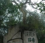 摩崖石刻的文化艺术历史价值